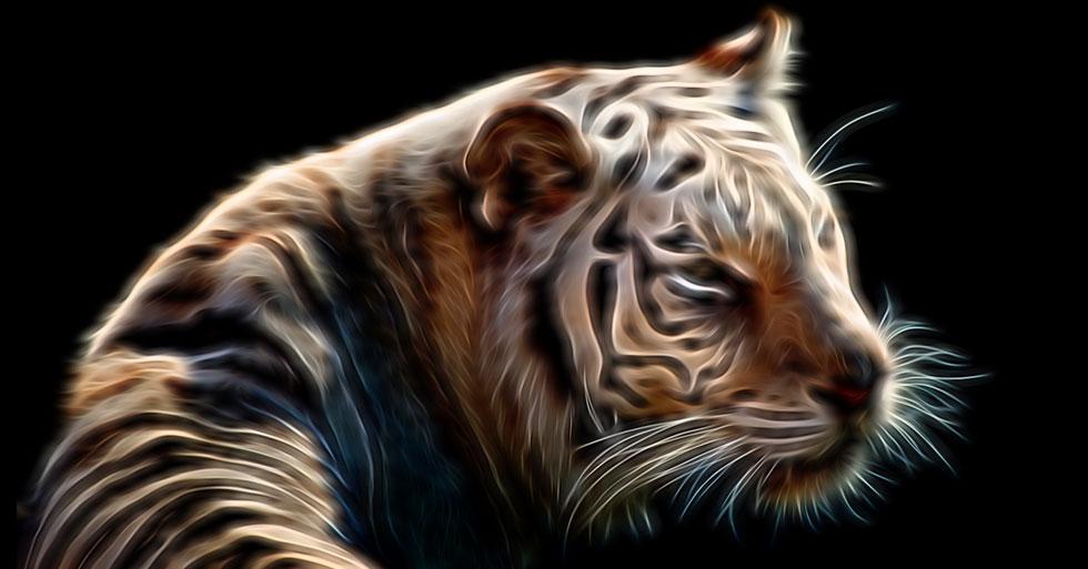 tiger-glow-hero