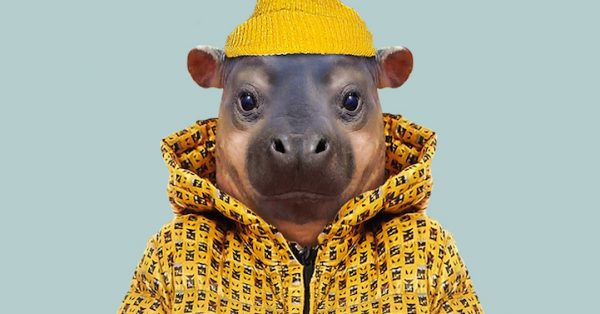 Lovable Portraits of Cute Baby Animals Dressed Like Humans